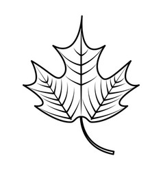 Mapple leaf isolated icon vector