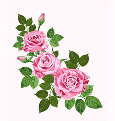Pink roses isolated on the white vector