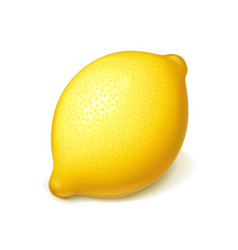 ripe juicy lemon vector image