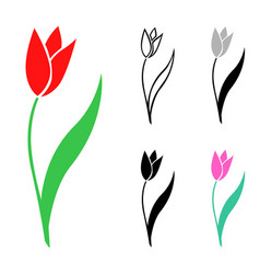 set tulips flowers vector image