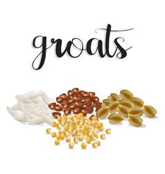 groats rice buckwheat oatmeal millet set vector image vector image