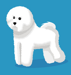 Bichon frise dog vector