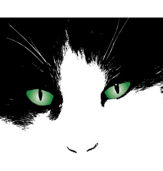 cats eyes design vector image