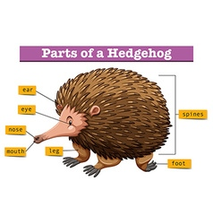 Diagram showing parts of hedgehog vector