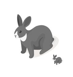 Isometric 3d of grey rabbit vector image