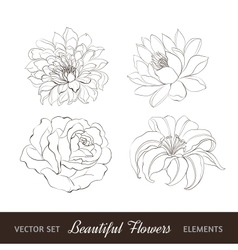 Set of flowers isolated over white vector image