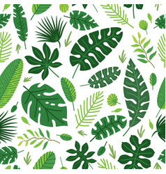 Tropical leaves pattern summer equatorial vector