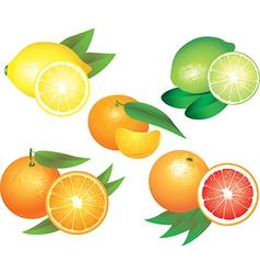 Citrus set vector