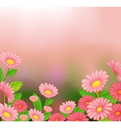 A view of the beautiful pink flowers vector image