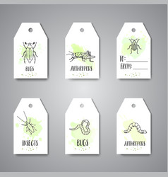 Bugs insects hand drawn tag pest control concept vector