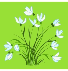 First spring flowers snowdrops vector image