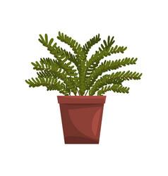 Maidenhair indoor house plant in brown pot vector
