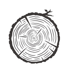 wood texture rings slice tree wooden stump vector image