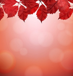Autumn Border With Red Leaves vector image
