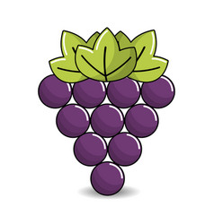 grapes fruit icon image vector image