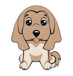 dog afghan hound breed vector image