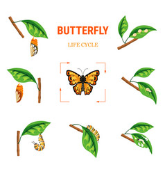 Butterfly life circle insect transformation larva vector