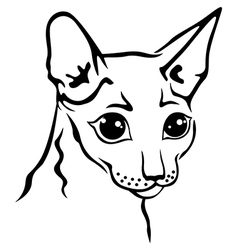 Cornish rex vector