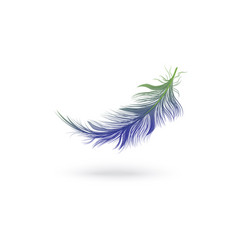 flying and falling blue fluffy feather from the vector image