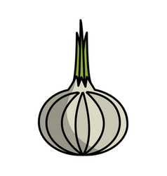 Fresh onion vegetable icon vector