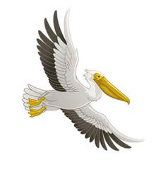 Great white pelican bird flying vector