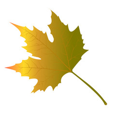 maple leaves yellow vector image