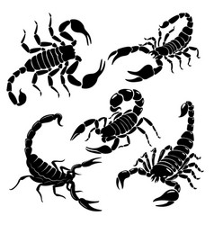scorpion set a collection black and white vector image