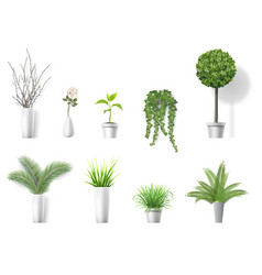 set home plants vector image