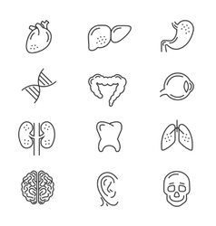Human organs line icons vector image vector image
