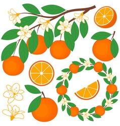 Oranges Set vector image vector image