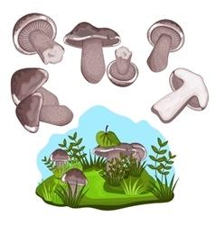 Blewits mushroom isolated vector image