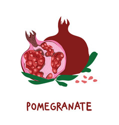 Square card with hand drawn pomegranate and vector