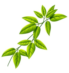 A leafy plant vector
