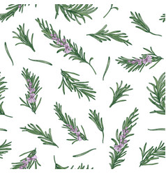 Herbal seamless pattern with rosemary sprigs vector