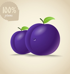 Fresh violet plums vector image vector image