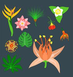 Beautiful tropical flower set design summer plants vector