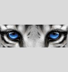 Big eyes blue eyes a white tiger close-up vector