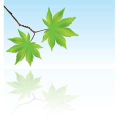 branch with maple leaves vector image