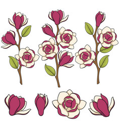 Colored of blooming magnolia branches vector