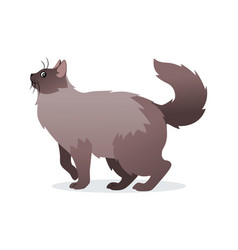 long-haired cat with long fluffy tail icon pet vector image