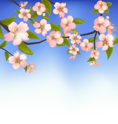 Spring Background of a Blossoming Tree Branch with vector