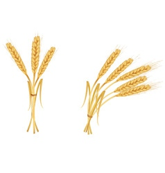 two group wiith ears of wheat vector image vector image