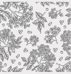 elderberry and elderflower seamless pattern hand vector image