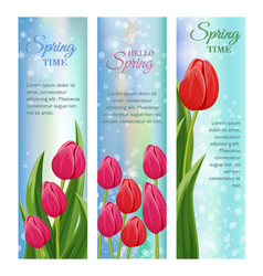 hello spring greeting cards with blooming tulip vector image