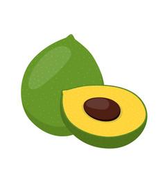 lucuma exotic fruit organic healthy superfood vector image