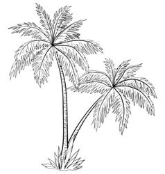 Palm trees contours vector