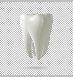 realistic tooth icon isolated on vector image