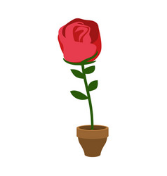 rose in pot isolated home flower flora on vector image