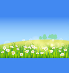 template background spring field of flowers of vector image