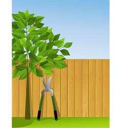 garden scissors vector image